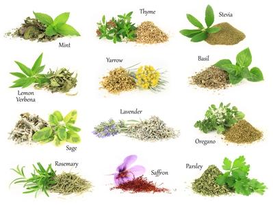Jak sb r me a su me l iv rostliny - Herbes aromatiques cuisine liste ...